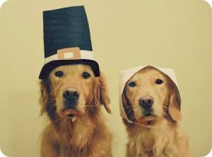 pilgrim-dogs