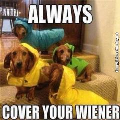 Always-Cover-Your-Wiener-Funny-Dogs-Wearing-Rain-Coats