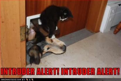 funny_dog_pictures_intruder_alert-s500x333-319734